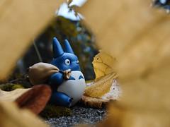 Chu-Totoro (Peenty) Tags: totoro chutotoro macro nikon nikonp900 p900