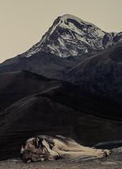Tired (E-C-K ART) Tags: mountain dog husky kazbegi georgia berg caucasus sleeping