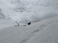 Pointing in the Right Direction ([Kevin] [McCarthy]) Tags: snow snowcaps dog pup mountain mountains himalayan hike trek trekking hiking india uttarakhand elevation high cloud cover base camp point