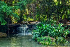 Small waterfall in Suan Luang Rama IX park in Bangkok, Thailand (UweBKK (α 77 on )) Tags: suanluang suan luang rama ix park garden recreation sony alpha 77 slt dslr green plants tree bush flora water waterfall flow brook creek bangkok thailand southeast asia