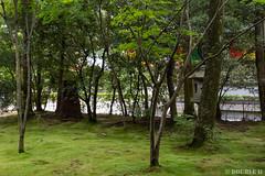 Kyoto Sightseeing 2019.10.11 (12) Ryōan-ji temple (龍安寺) (double-h) Tags: ryōanji ryoanji temple buddhisttemple zenbuddhisttemple zen kyoto kyotocity sightseeing 龍安寺 臨済宗 京都 京都市