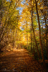 path through the woods-1.jpg (McMannis Photographic) Tags: photography travel northcarolina fallcolors destination landscapeandnature southmountainstatepark mountainstream autumn blueridge carolinas connellysprings explore foothills mountain nc ncpark ncstatepark southeast tourism ngc worldtrekker