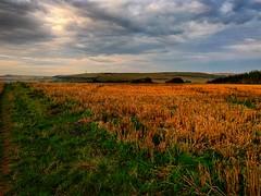 Fields at littlemoor (Chris Atkins65) Tags: fields weymouth dorset littlemoor autumn nature