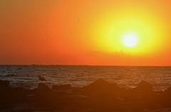 Sunrise - Amanecer (En memoria de Zarpazos, mi valiente y mimoso tigre) Tags: sun sea seascape skyfire skyred seagull espigón breakwater sunrise amanecer alba mar playa mare spiaggia gaviota sol sole