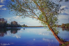 Tranquility (Stathis Iordanidis) Tags: river riverside tree reflections nature alt rhein xanten nrw old rhine clear water blue silence tranquility serenity