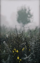 ❇ Autumn ❇ (PattyK.) Tags: ioannina giannena epirus ipiros greece grecia griechenland ellada autumn october 2019 snapseed nikond3100 fog nature naturephotography ιωάννινα γιάννενα ελλάδα βαλκάνια φύση ομίχλη φθινόπωρο οκτώβριοσ ιστόσ ιστόσαράχνησ web spiderweb