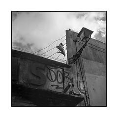 rag • porto, portugal • 2019 (lem's) Tags: shirt barbed wire fil barbelé ruin ruine wall mur urbex porto portugal rolleiflex t rag guenille