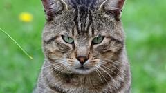 DSC_7178 (sylvette.T) Tags: animal chat 2019 félin cat