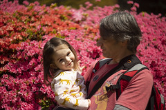 Tabby and daddy and some very bright Azaleas! (louisa_catlover) Tags: nationalrhododendrongardens dandenongrangesbotanicgarden garden nature outdoor dandenongs olinda melbourne victoria australia spring portrait family child toddler daughter tabby tabitha husband father karl helios helios442 manual bokeh