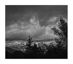 the sky darkens when we leave No-Man's-Land (Armin Fuchs) Tags: arminfuchs nomansland dark dangerous 6x7 trees clouds sky landscape anonymousvisitor thomaslistl wolfiwolf jazzinbaggies autumn niftyfifty