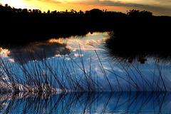 Florida coastal salt water marsh at sunset (klauslang99) Tags: klauslang nature naturalworld northamerica florida coastal salt water marsh sunset reeds ngc