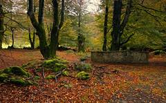 El cercado (pascual 53) Tags: largaexpo canon 5ds 1635mm urbasa sierra navarra otoño cercado colores finalluvia