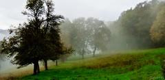 ~~ Brume en la prairie ~~ (Joélisa) Tags: octobre2019 automne couleur prairie brume mist brouillard couleurs feuilles