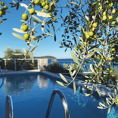 there were olives in the pool (mennyj) Tags: vacation travel croatia maslinica split germany munich fall 2019 mobile iphone iphone11 europe international adriatic sea dalmatian coast pool blue olive tree water swim swimming view