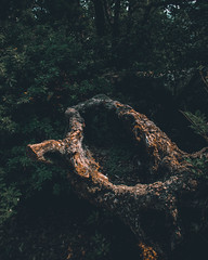 Orange-Tree (Adriano Wasescha) Tags: baum tree orange wald japan düster alter dunkel canon canoneos200d tamron hiroshima forest moody travel reisen travelphotography reisefotografie zerstört damage old angst natur nature grün welt mutternatur laufederzeit kunst kunstdernatur natureart