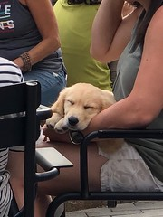 The most adorable dog