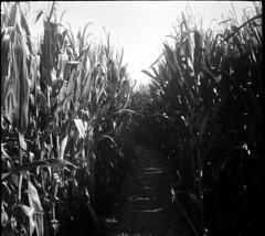 Zeiss Ikon Tenax II (mkk707) Tags: film 35mmfilm blackwhite zeissikontenaxii carlzeissjenatessar204cm agfaapx100 wwwmeinfilmlabde 24x24 germancameras rangefinder