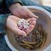 Alter Bauer hält geschälte Bohnen in der Hand