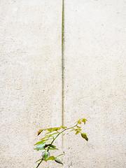 ShyPlant.jpg (Klaus Ressmann) Tags: klaus ressmann omd em1 autumn fparis france plant wall decay design flicvarious minimal klausressmann omdem1