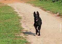 Sábado animal (sonia furtado) Tags: sábadoanimal animal mamífero cão cachorro soniafurtado frenteafrente