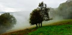 ~~ Brume en la prairie ~~2 (Joélisa) Tags: octobre2019 automne couleur prairie brume mist brouillard couleurs feuilles