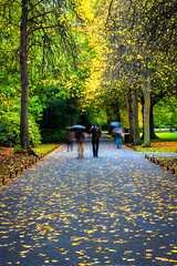 autumn stroll (johnoreillydesign) Tags: autumn autumncolours fall dublin ireland park trees