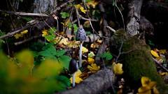 Carl Zeiss Planar 50mm f1.7 (gyulaiván) Tags: sony zeiss planar f17 50mm mushroom a6500 wood autumn bükkhegység hungary light colorfull contax color