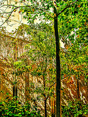 Autumn Season as Trees Cast Its Shadow in Manhattan (nrhodesphotos(the_eye_of_the_moment)) Tags: dsc82243001084 wwwflickrcomphotostheeyeofthemoment theyeofthemoment21gmailcom trees autumn shadows nature plantlife manhattan wall outdoors green autumncolors bark landscape grain nyc impressionism