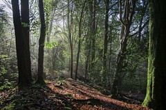Down at Brock Bottom (Taken By Me Photography) Tags: walk woods woodland lancashire lancs brockbottom nikon north takenbyme takenbymephotography wwwtakenbymephotographycouk tree trees outside outdoors countryside country scene