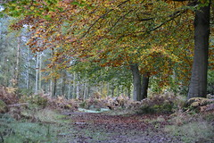 The colours of Autumn (moniquerebanks) Tags: autumn herfst herbst autumnleaves palette colours colors nature natuur natura nikond7100 forest bos wald scenery view herstbladeren uk england autumncolours herfstkleuren