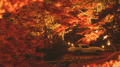 Autumn: 2 (at1503) Tags: car americancar japan red leaves trees night dark lights chevrolet corvette chevroletcorvette oldcar vintagecar fallcolors fall autumn autumncolours colours autumnleaves gtsport granturismo granturismosport motorsport racing game gaming ps4
