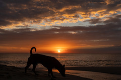 at the beach (Frank KR) Tags: sunset sunrise sonnenuntergang vietnam asia asien beach dark dog sea meer outside nature