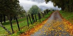 ~~ Cette fois...l'automne est bien là ! ~~ (Joélisa) Tags: octobre2019 automne couleur prairie brume mist brouillard couleurs feuilles chemin