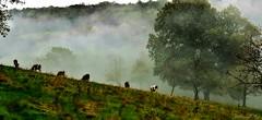~~ Brume en la prairie ~~3 (Joélisa) Tags: octobre2019 automne couleur prairie brume mist brouillard couleurs feuilles