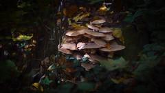 Carl Zeiss Planar 50mm f1.7 (gyulaiván) Tags: zeiss planar f17 50mm sony a6500 mushroom bükkhegység hungary tree wood contax color light shadow