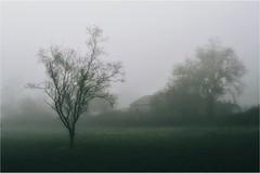 October (PattyK.) Tags: ioannina giannena giannina epirus ipiros balkans hellas ellada greece grecia griechenland europe october autumn fog snapseed nikond3100 ιωάννινα γιάννενα ήπειροσ ελλάδα βαλκάνια ευρώπη οκτώβριοσ φθινόπωρο ομίχλη nature naturephotography tree