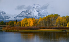 my favorite color is OCTOBER! (laura's Point of View) Tags: autumn fall seasons aspen aspens trees forest wilderness grandtetonnationalpark tetons mountain mountains snow snakeriver waterscape landscape oxbowbend wyoming moran mountmoran mtmoran jacksonhole west western unitedstates beautiful nature mothernature lauraspov lauraspointofview