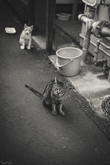 猫 (fumi*23) Tags: ilce7rm3 sony street sel55f18z 55mm sonnartfe55mmf18za a7r3 animal alley cat chat gato neko bw blackandwhite monochrome ねこ 猫 ソニー emount
