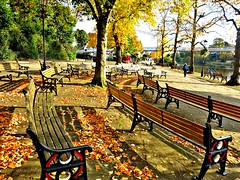 Golden Autumn by the river at Chester (Tony Worrall) Tags: autumn fall seasonal location color colours leaf leaves visitors trees season golden place welovethenorth nw northwest north update uk england visit area attraction open stream tour country item greatbritain britain english british gb capture buy stock sell sale outside outdoors caught photo shoot shot picture captured ilobsterit instragram nature natural chester seats bench riverside