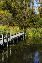 Fall Day In The Wetlands (elpeterso69) Tags: heronhaven landscapes nature naturephotography photography photoart photograph photo picture artistic photographicart lake pond wetland aquatic omahane nebraska midwest iowa flora floral leaves dsc01611