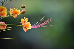 Flower Singapore (Michele Centurelli) Tags: singapore city nikon d7200 jungle flower forest macro tamron 70300