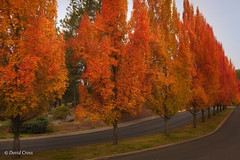 My Little Town 5 (Autumn) (buffdawgus) Tags: california landscape nevadacity sierranevadafoothills autumncolor canon5dmarkiii lightroom6 canonef35mmf2isusm topazstudio maiduroad fall nevadacounty autumn