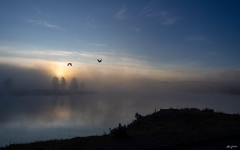 geese on a foggy and peaceful morning (kleiner_eisbaer_75) Tags: yellowstone nationalpark np usa wyoming fluss river neblig nebel fog landschaft landscape morgens früh gänse vogel spiegelung reflections