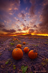 Give Them Pumpkin To Talk About (Phil~Koch) Tags: life mood emotions country rural outdoors colors living heaven weather horizons lines landscape art meadow sky sunset clouds scenic vertical photography office portrait serene morning dawn nature natural environment inspired inspirational season beautiful hope love joy dramatic unity trending popular canon fineart arts shadow sun sunrise light peace wisconsin shadows endless earth sunlight horizon pastel yellow autumn fallcolors pumpkin pumpkins patch field farming agriculture orange