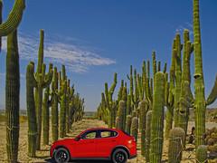 Alfa Romeo, Alfa Romeo, Where art thou Alfa Romeo? (oybay©) Tags: alfaromeo alfa romeo car autombile cactus cacti arizona peoria color colors colorful cactusfarm