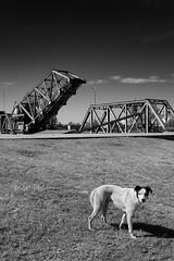 Puente del Perro (nestor.ferraro) Tags: dog bridge laboca buenosaires contrast