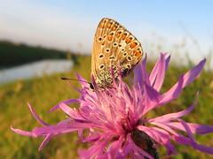 IMG_0011x (gzammarchi) Tags: italia paesaggio natura pianura campagna ravenna borgomontone animale farfalla