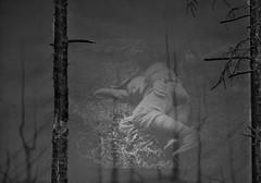 Sleeping in the Shadows (Steve Nimmons | Author) Tags: soldier british army military ww1 worldwarone somme france sleep shadows bw blackandwhite absoluteblackandwhite