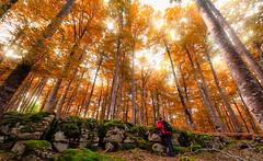 PUN (juan luis olaeta) Tags: paisajes nature landscape forest tree photoshop raw fujifilmxt3 lightroom pagoa basquecountry euskalherria