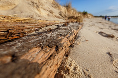 Beach Walk (Karol A Olson) Tags: beach capehenlopen delawarebay atlantic sand lewes delaware water wood walking